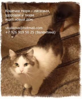 Помогите спасти ласковую домашнюю кошечку - Нюра_1 - текст.jpg
