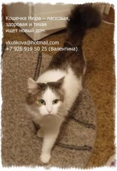 Помогите спасти ласковую домашнюю кошечку - Нюра_2 - текст.jpg