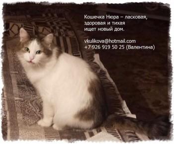 Помогите спасти ласковую домашнюю кошечку - Нюра_3 - текст.jpg